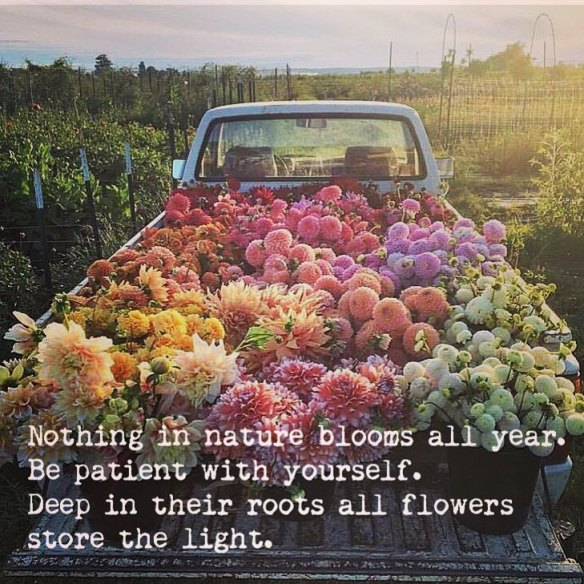 projecthappiness_bloom_quote